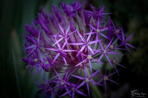 Flower from Tenterden Station