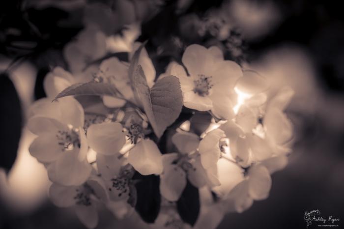 Flower of Batemans