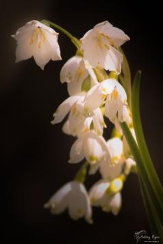 Flowers from Kearsney