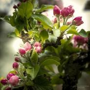 Bateman Blossom