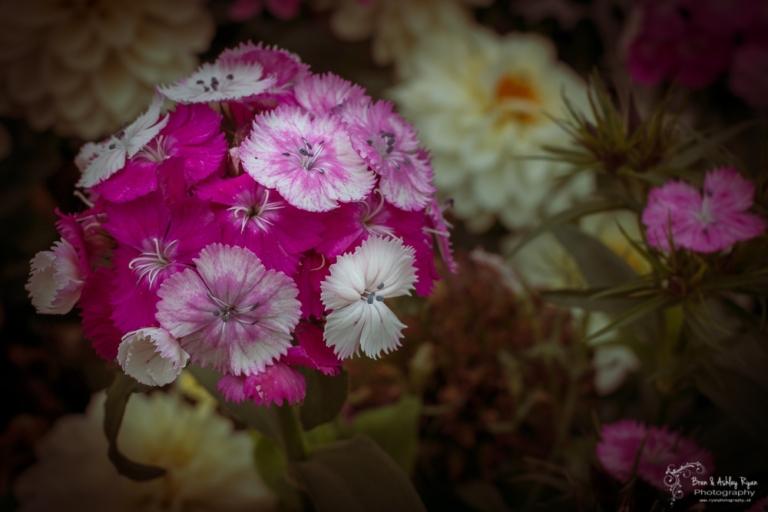Flower from York
