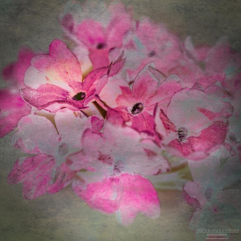 Paint Effect Flowers