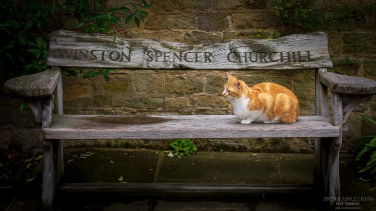 Chartwell Cat