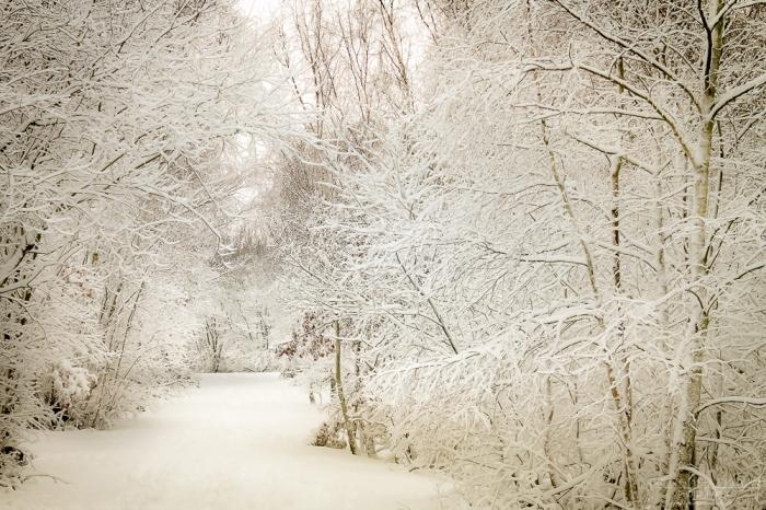 Snow Shorne Country Park