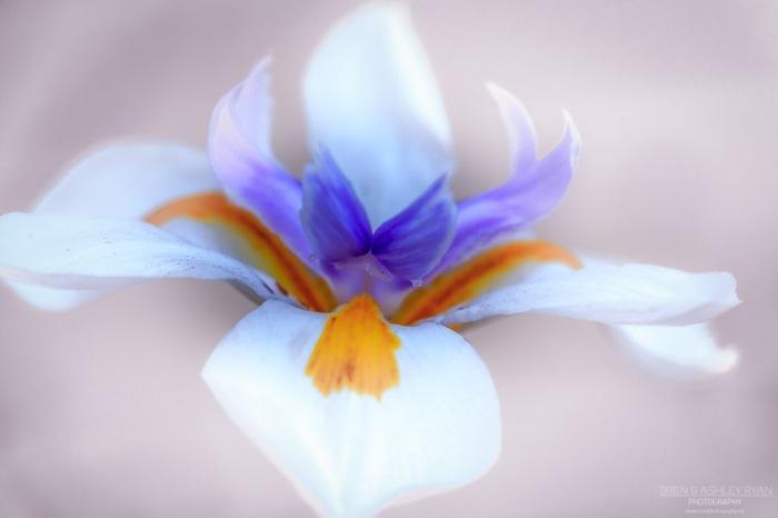 Pastel White
