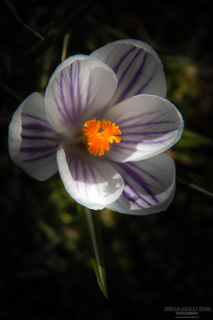 Godinton Flower