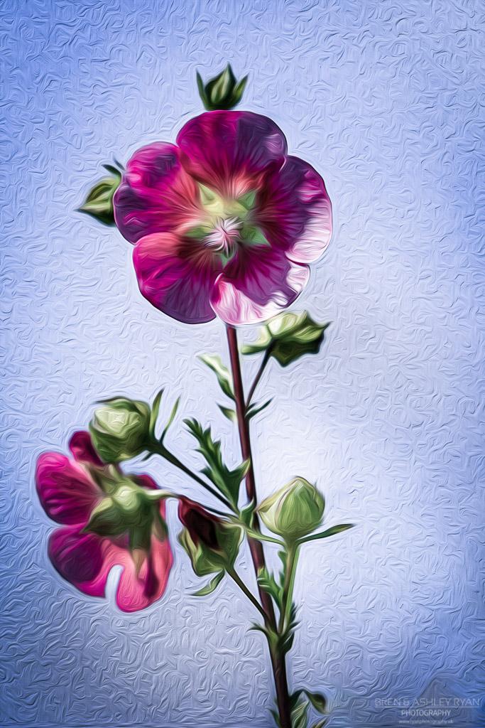 Oil Painted Flowers