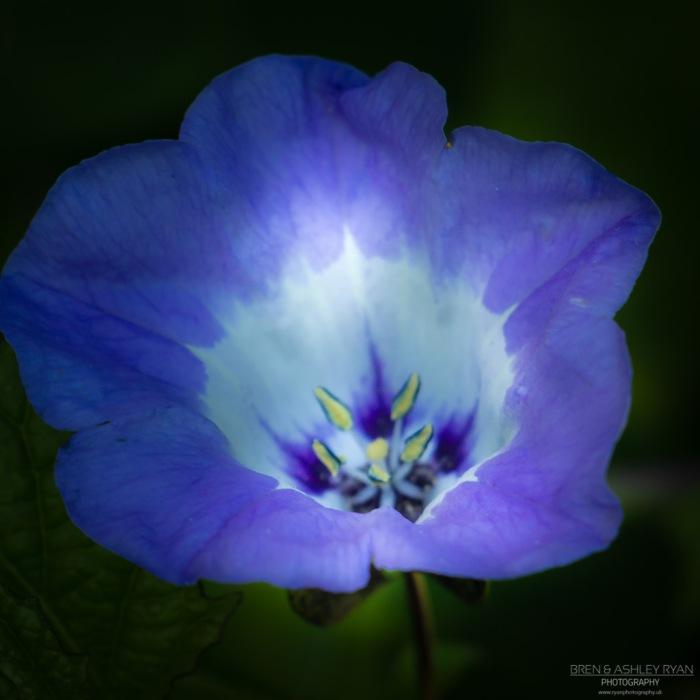 Flower from Quex