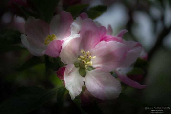Flower of Bateman