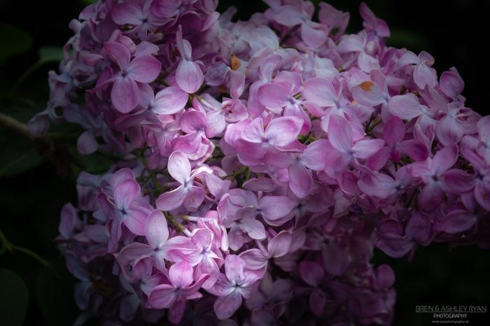 Flower from Broadview