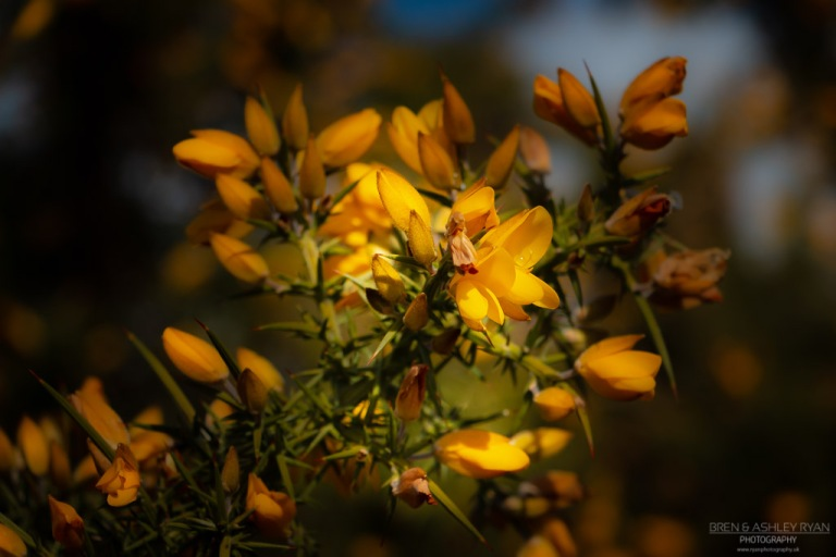 A photograph of yellow flowers