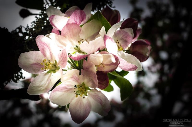Batemans Blossom