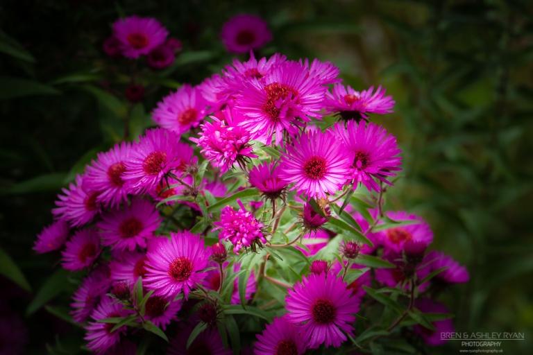 Daisy like flowers