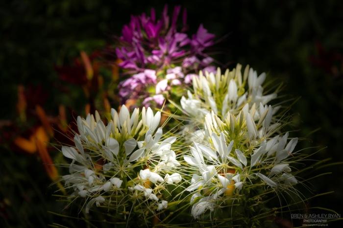 Flowers from Sissinghurst