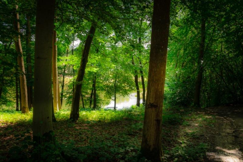 The woodland