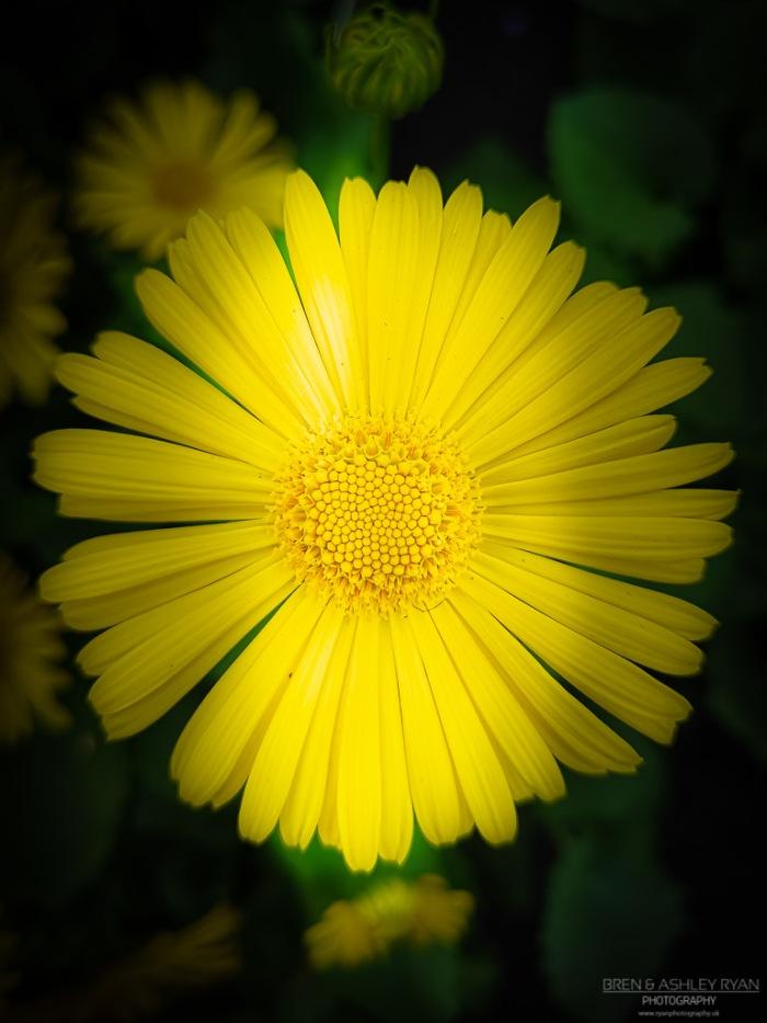 Yellow flower