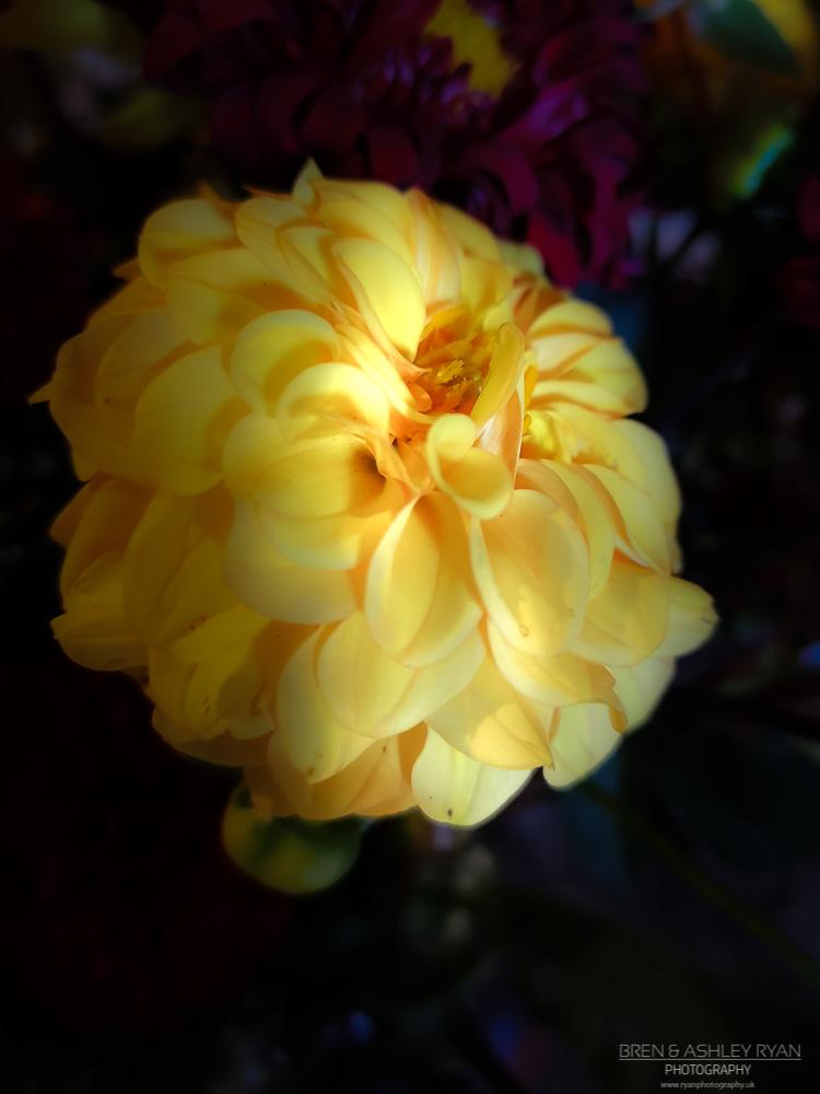 Ywllow flower