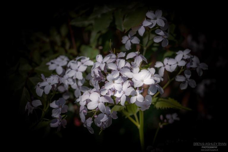 Dodington Flowers