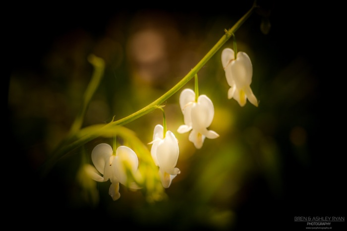 Heart-Shaped Flowers