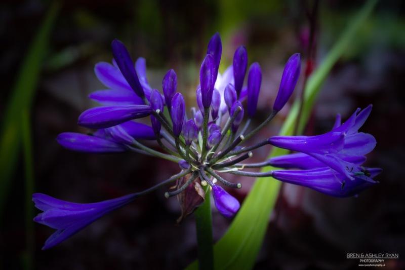 Scotney Castle Flower