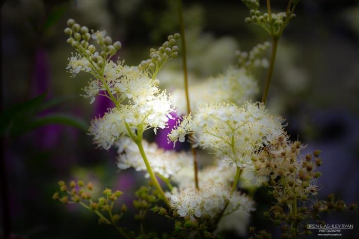 Scotney Castle Flowers