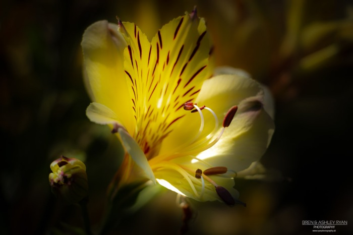 Striking Yellow