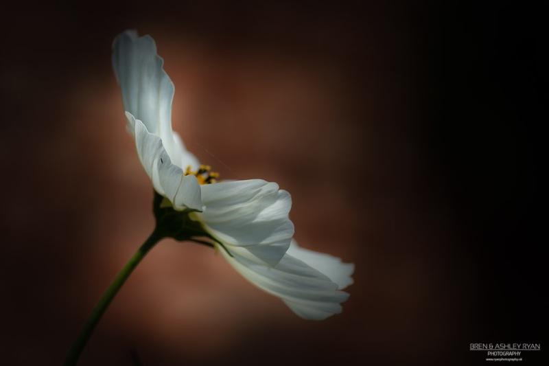 Sissinghurst Flower