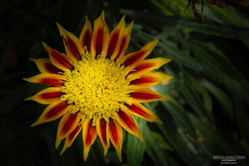 Flower from Lullingstone