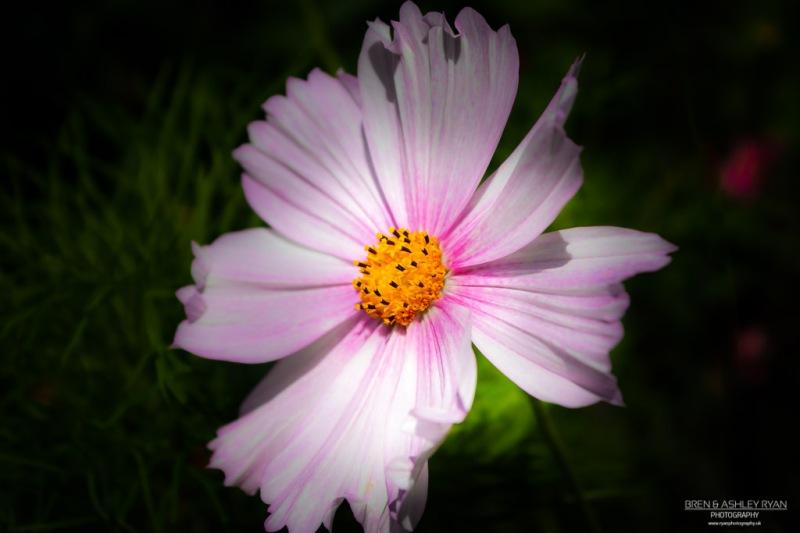 Lullingstone Flower