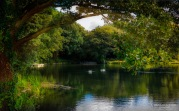 Lullingstone Lake