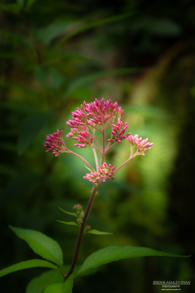 Stoneacre flower
