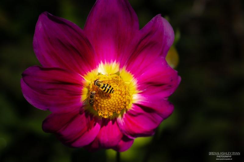 Belmont Flower,