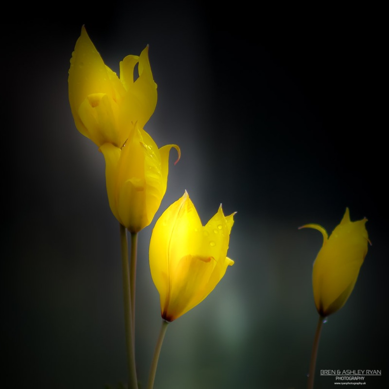 Yellow Flowers From Emmetts