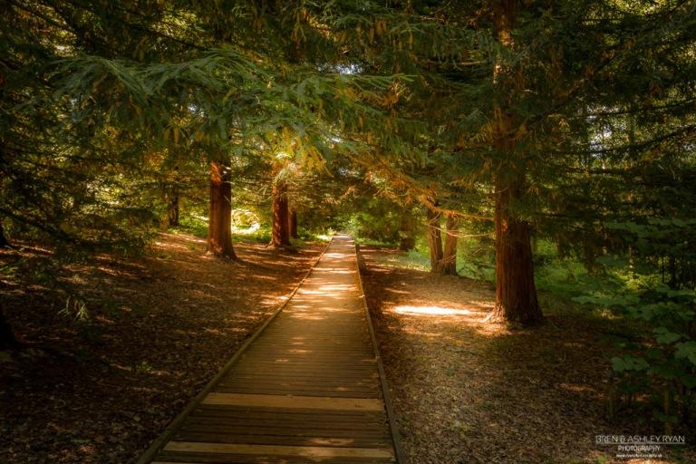 Bedgebury Walk