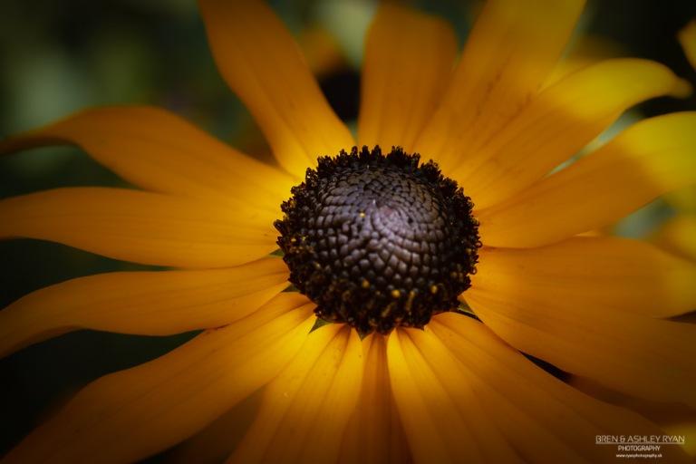 Flower from Sissinghurst