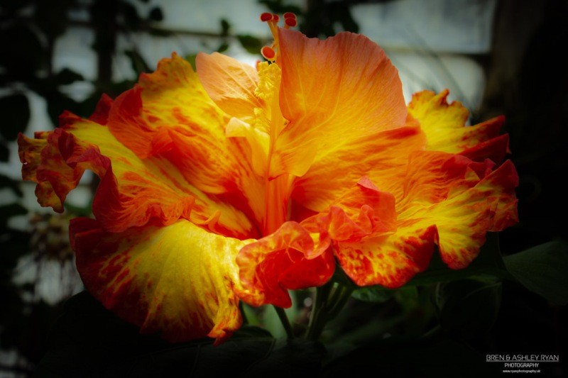 Orange and Yellow Flower