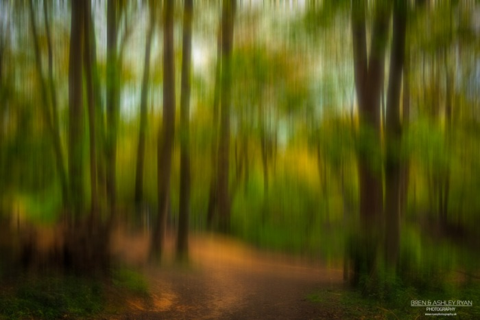 Through the glade