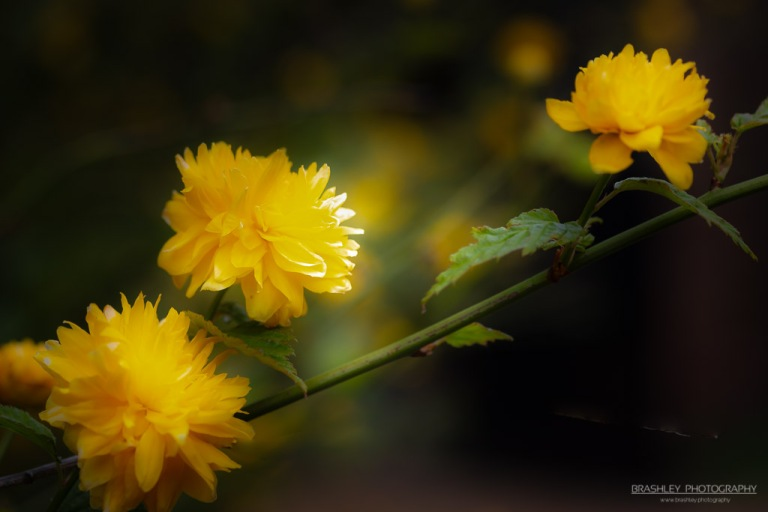 Batemans Flowers