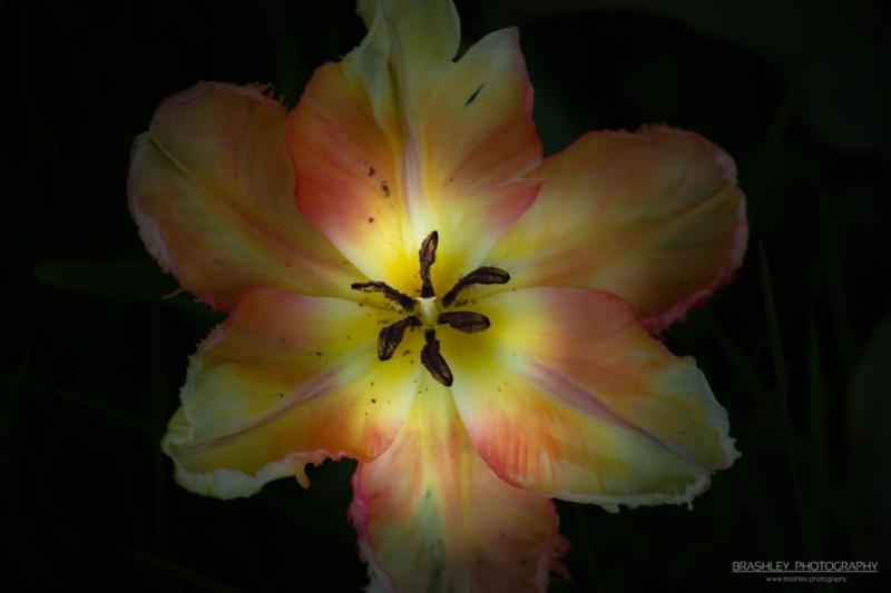 Doddington Flower