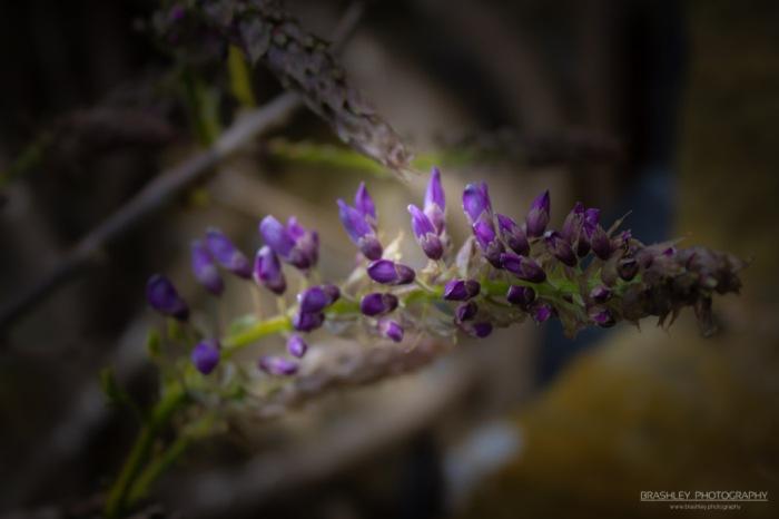 Purple flowers from Batemans
