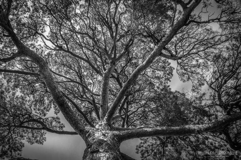 Tree at Ightham Mote