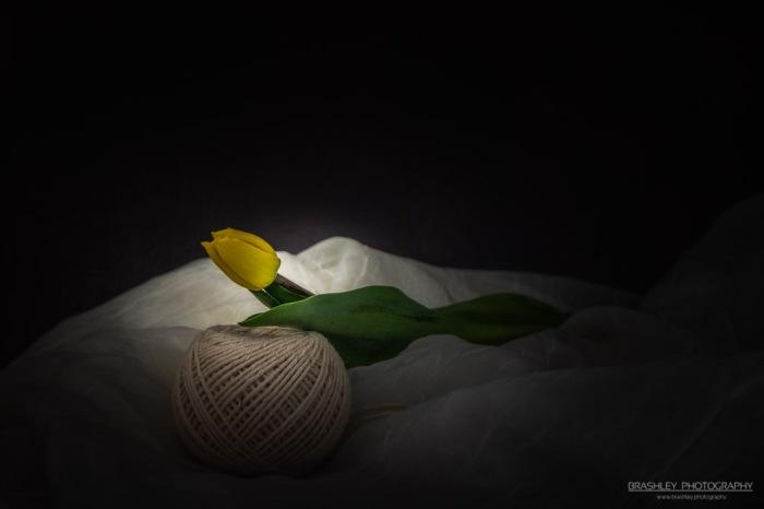 A single tulip