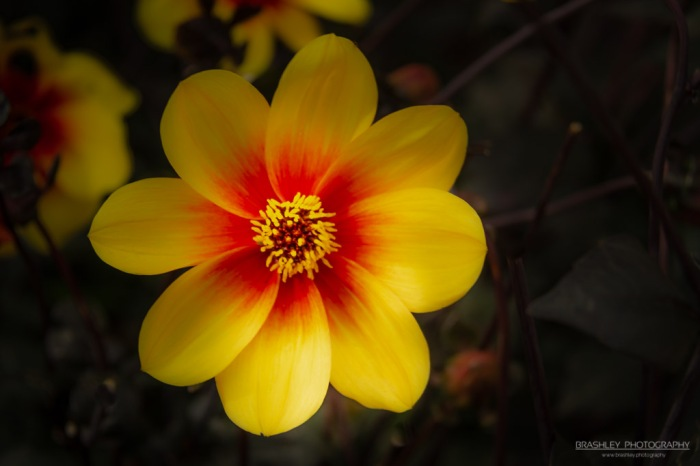 Groombridge Place Flower