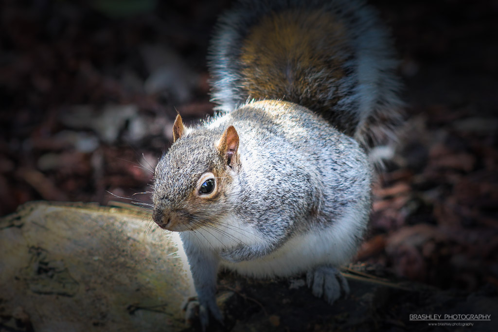 Throwback Thursday – Squirrel