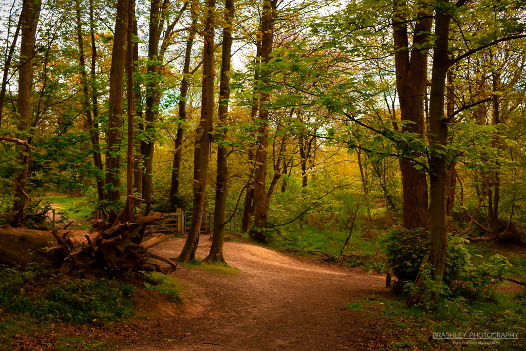 Ashenbank Woods – Changing Colours – HSL