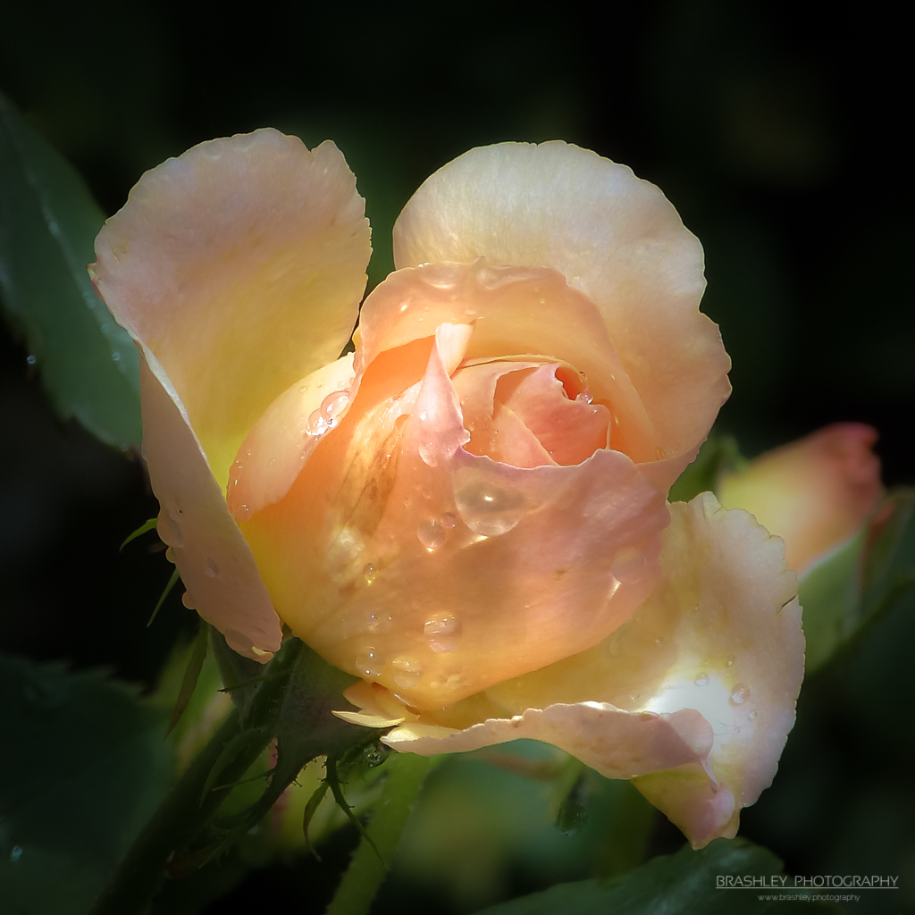 Floral Friday – FF#28 – FOTD