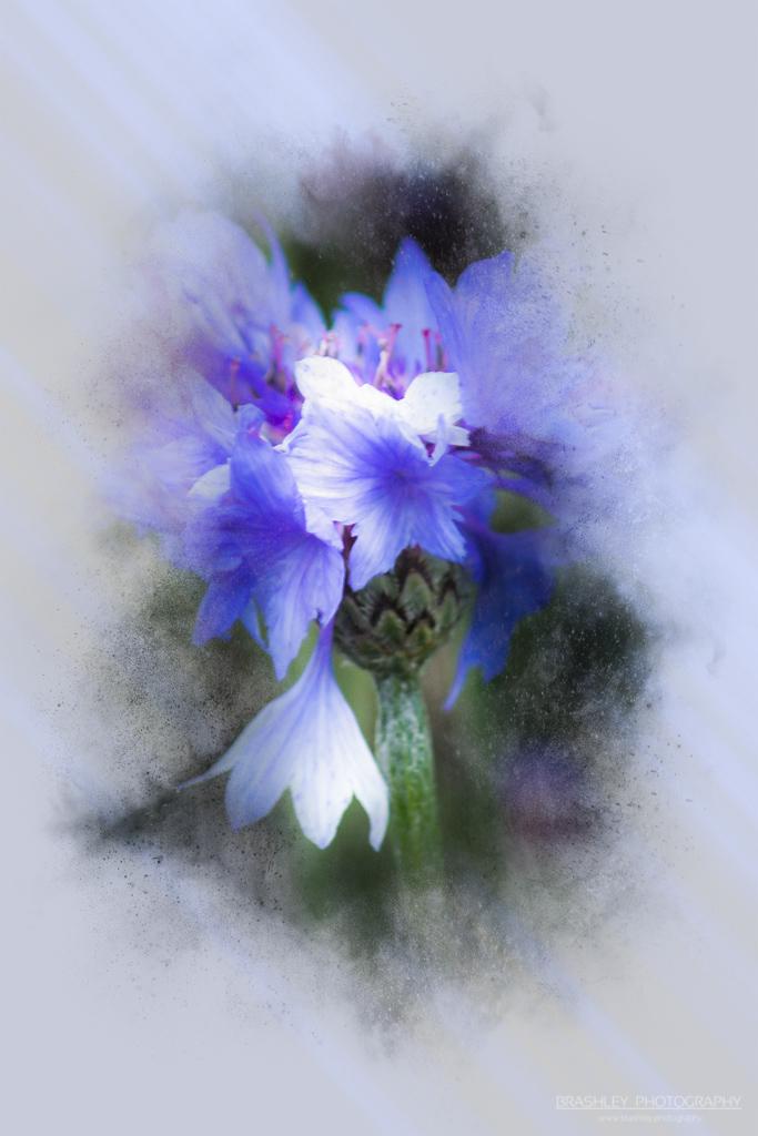Flower of the Day – 16th September 2021
