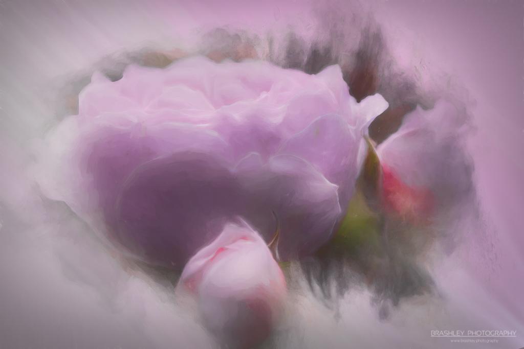 Floral Friday – FF#38 – FOTD